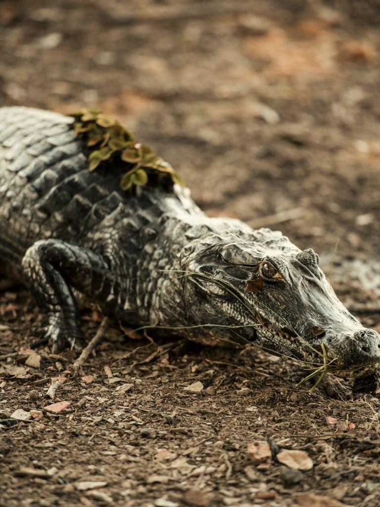 [Territórios] 2ª Seção - A Jornada (Pantanal3)